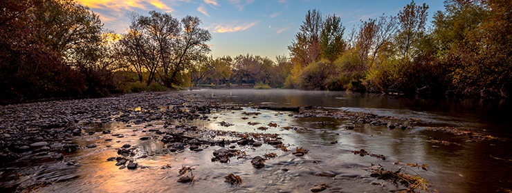 Homestead Eagle Idaho Boise River